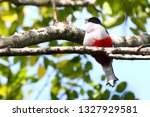 The cuban national bird is the Cuban Trogon. This bird is endemic to cuba. In the area of Zapta are several beautiful birds and other animals. The Trogon have blue, white, black and red colors.