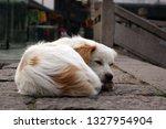 Dog Sleeping On The Street In...