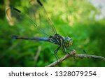 Stock photo side view of dragonfly macro shot dragonfly 1328079254