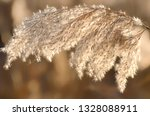 dry reed on the river  cane... | Shutterstock . vector #1328088911