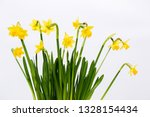 small yellow daffodils on a...   Shutterstock . vector #1328154434