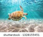 Hawksbill Sea Turtle  Swiming...