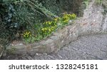 spring daffodils beside the...   Shutterstock . vector #1328245181