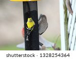 An American Goldfinch  And A...