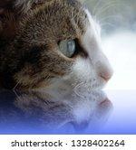 birdwatching cat with reflexion | Shutterstock . vector #1328402264