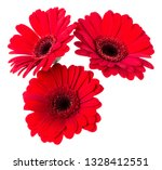 three   red gerbera flower... | Shutterstock . vector #1328412551