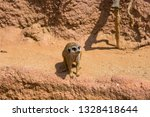 meerkat animal  latin name... | Shutterstock . vector #1328418644
