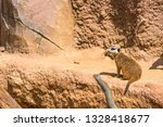 meerkat animal  latin name... | Shutterstock . vector #1328418677