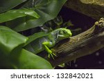 Iguana In The Jungle