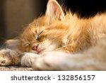 Stock photo sleeping kitten 132856157