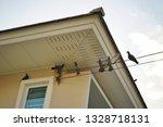 Small photo of birds many much has skulk on a house