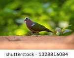 the common emerald dove or... | Shutterstock . vector #1328816084