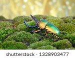 Beetle   Sawtooth Beetles ...