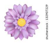 Fresh Lilac Gerber  Isolated O...