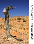 Old tree in the Matmata desert in Tunisia - stock photo