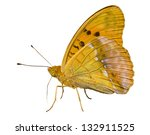 Small photo of A close up of the butterfly (Brentis). Isolated on white.