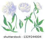 white peony floral botanical... | Shutterstock . vector #1329244004