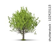 An Image Of A Tree Isolated On...