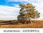 solitary pine in the foreground ... | Shutterstock . vector #1329289511