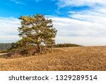 solitary pine in the foreground ... | Shutterstock . vector #1329289514