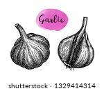 ink sketch of garlic isolated... | Shutterstock .eps vector #1329414314