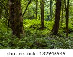 Fern Forest  Batumi Botanical...