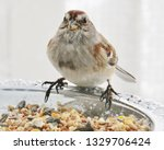 sparrows feeding. sparrows... | Shutterstock . vector #1329706424