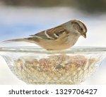 sparrows feeding. sparrows... | Shutterstock . vector #1329706427