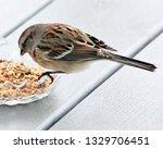 sparrows feeding. sparrows... | Shutterstock . vector #1329706451