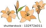 vector orange lily floral...   Shutterstock .eps vector #1329726011