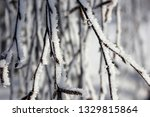 morning frost painted birch... | Shutterstock . vector #1329815864