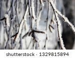 morning frost painted birch... | Shutterstock . vector #1329815894