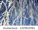 morning frost painted birch... | Shutterstock . vector #1329815981