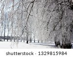 morning frost painted birch... | Shutterstock . vector #1329815984