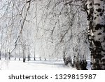 morning frost painted birch... | Shutterstock . vector #1329815987