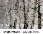 morning frost painted birch... | Shutterstock . vector #1329816041
