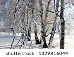 morning frost painted birch... | Shutterstock . vector #1329816044