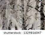 morning frost painted birch... | Shutterstock . vector #1329816047