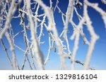 morning frost painted birch... | Shutterstock . vector #1329816104