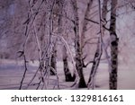 morning frost painted birch... | Shutterstock . vector #1329816161