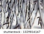 morning frost painted birch... | Shutterstock . vector #1329816167