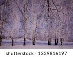 morning frost painted birch... | Shutterstock . vector #1329816197