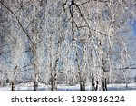 morning frost painted birch... | Shutterstock . vector #1329816224