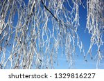 morning frost painted birch... | Shutterstock . vector #1329816227