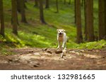 yellow labrador retriever is...   Shutterstock . vector #132981665