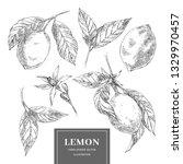 lemon hand drawn vector... | Shutterstock .eps vector #1329970457
