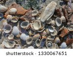 Pile Of Colorful Shells On...
