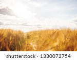 wheat field with ripe spikelets ... | Shutterstock . vector #1330072754