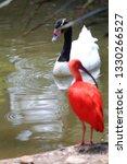 a red bird | Shutterstock . vector #1330266527