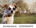 portrait jack russell dog high... | Shutterstock . vector #1330360694